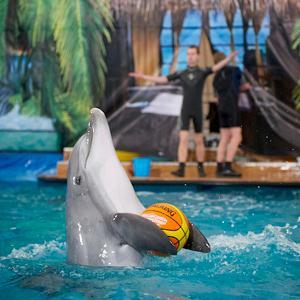 Дельфинарии, океанариумы Звенигорода