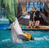 Дельфинарии, океанариумы в Звенигороде