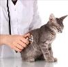 Ветеринарные клиники в Звенигороде